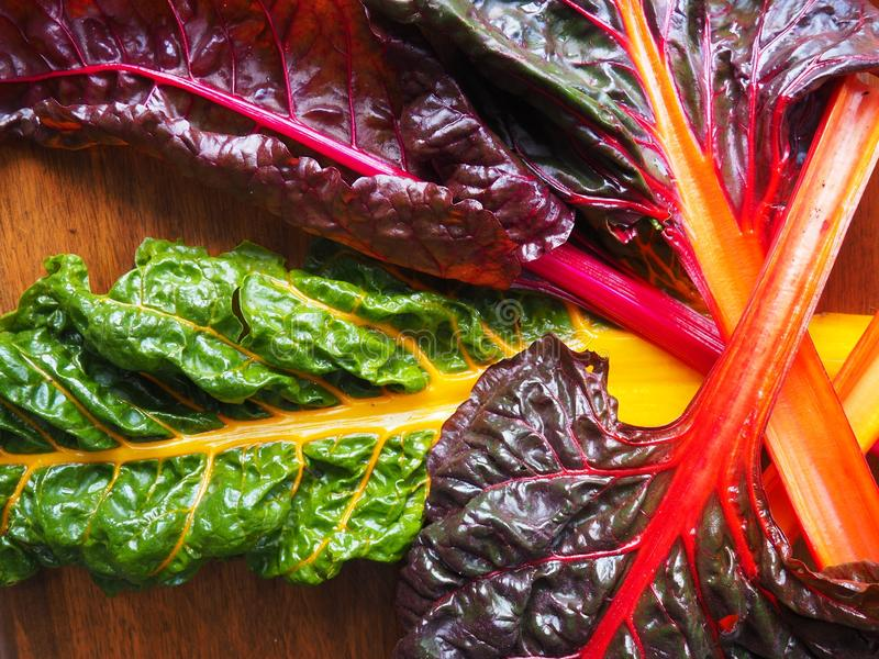 Organic Rainbow Chard stock photos