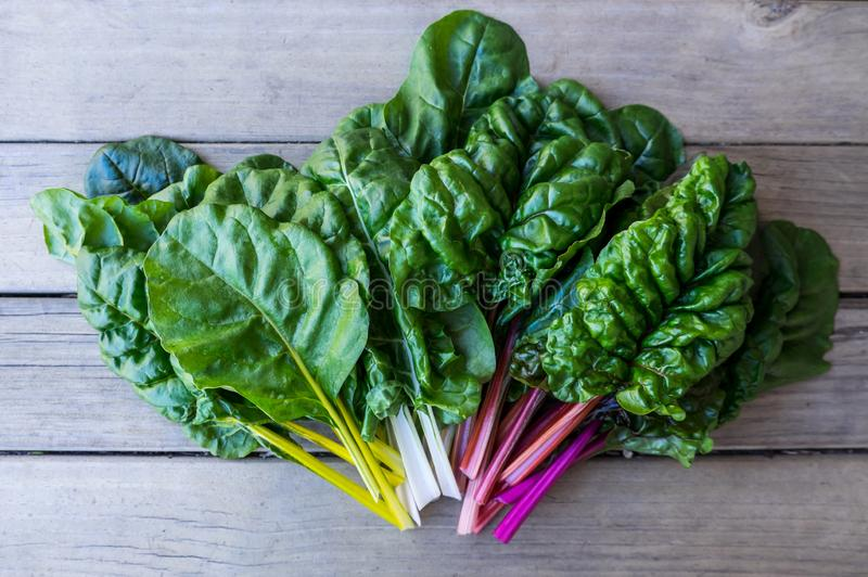 Organic rainbow chard: spray-free leafy greens in fan arrangement on rustic wooden background royalty free stock photography
