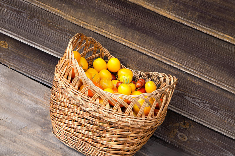 Organic rare freshly picked colorful heirloom tomatoes in a wick stock image