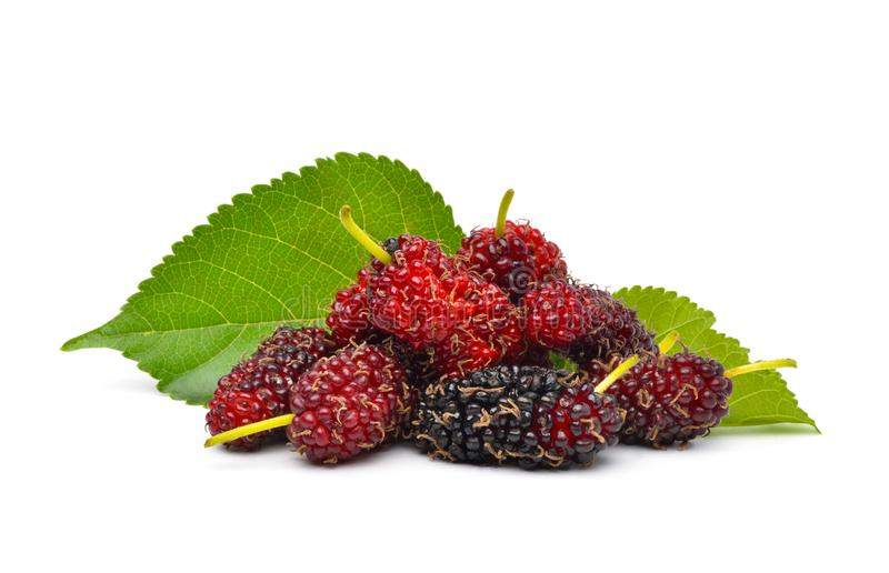 Organic Red Mulberry fruits. Pile of organic Mulberry fruits with green leaves isolated on white background stock image