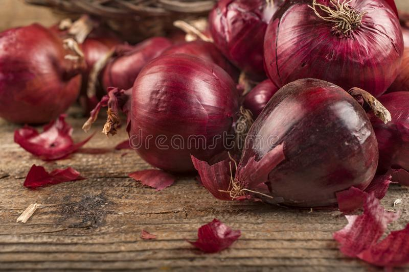 Organic red onion grown in a local garden. The concept of healthy food from autumn fruits stock photography