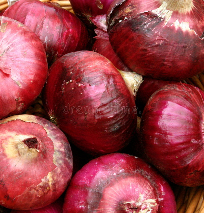 Download Organic Red Onions stock image. Image of natural, growth - 2907913