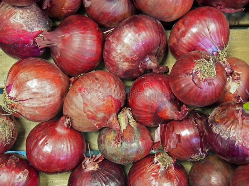 Organic red onions with uneven shapes and rough red skins stock photo