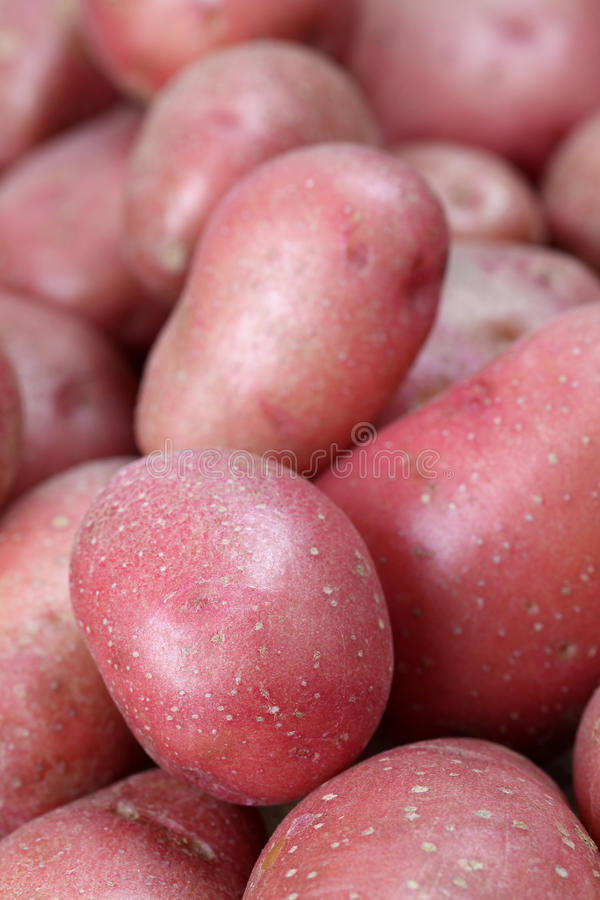 Download Organic red potatoes stock image. Image of food, root - 16590127