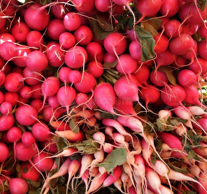Organic Red Radishes stock photo