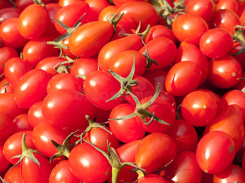 Organic red Tomato stock photo