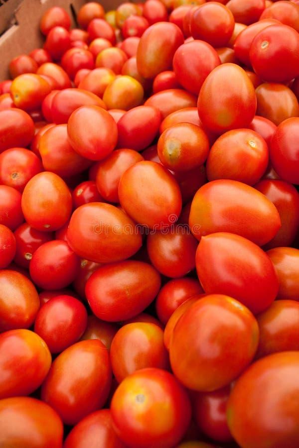 Free Organic Red Tomatoes Stock Photo - 14566430