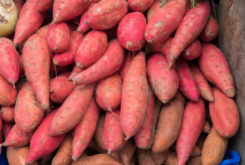 Organic red yams for sale at city market. Organic red yams for sale at city farmers market stock photography