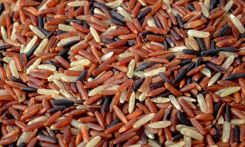 Organic rice, Mixed rice stock photo