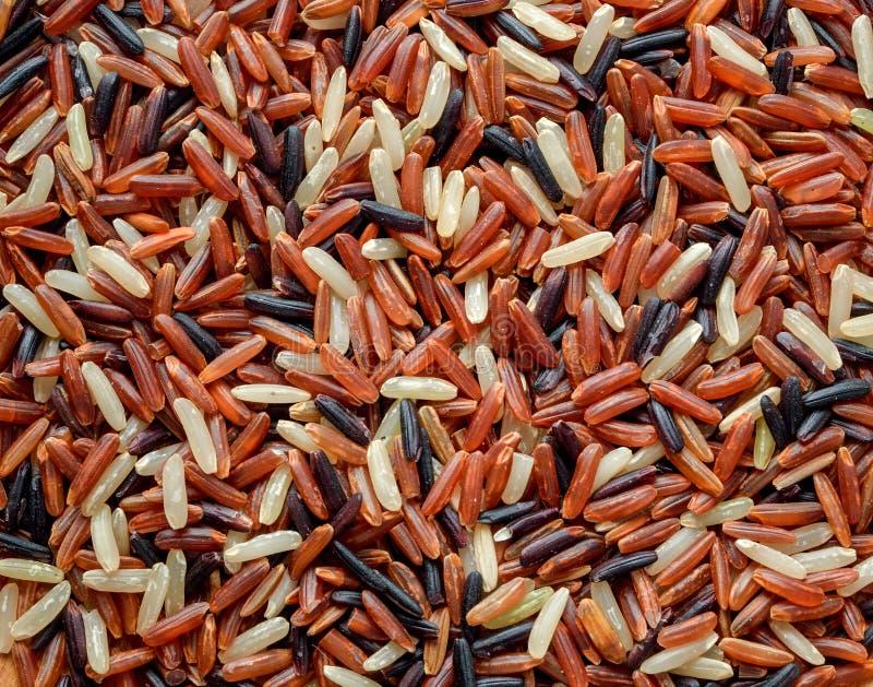 Organic rice, Mixed rice stock photography