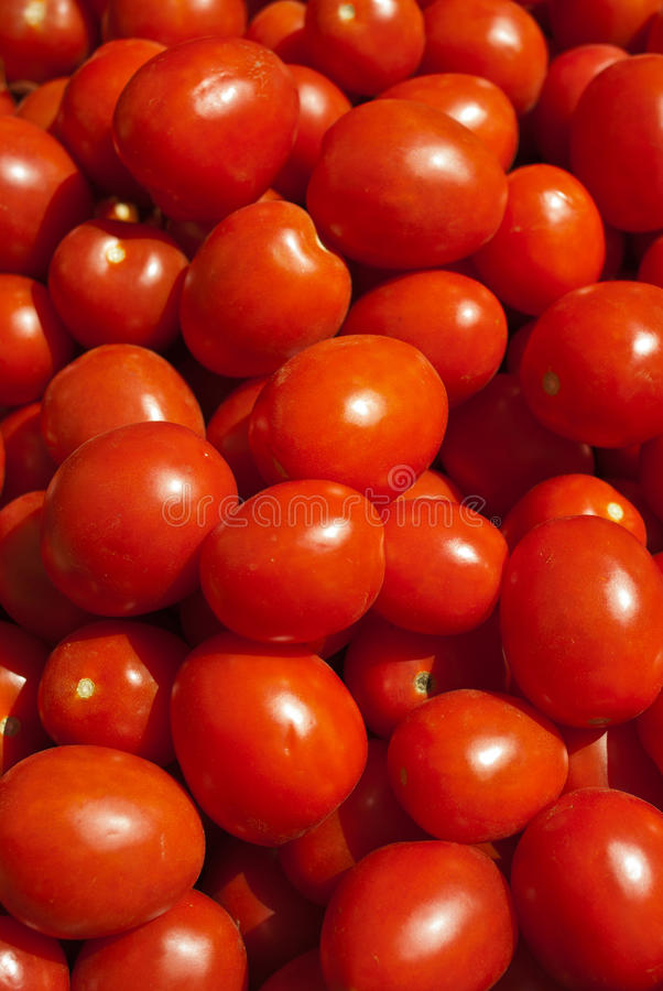 Organic Roma Tomatoes stock image