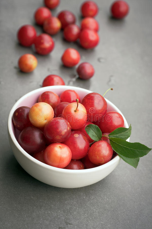Download Organic sloes stock image. Image of themes, photography - 25489923