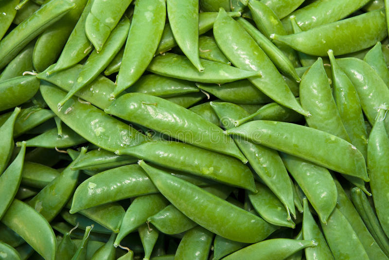 Organic Snow Peas stock photos