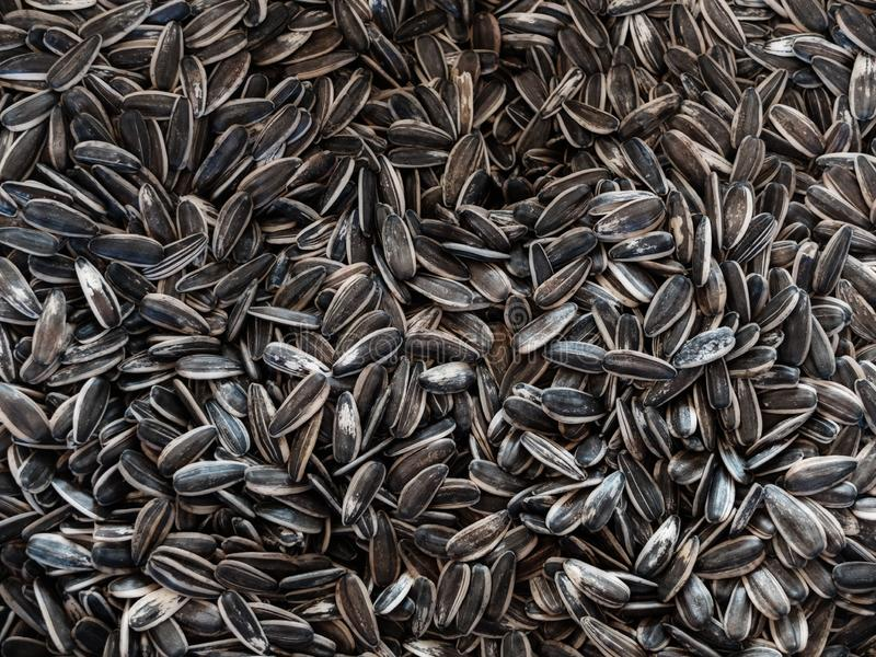 Organic sunflower seed. Texture or background concept.  stock photography