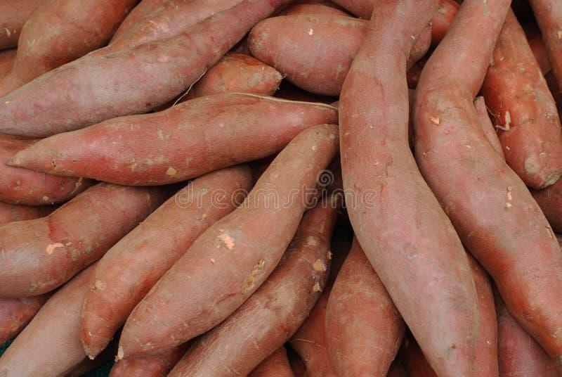 Organic Sweet potatoes royalty free stock image