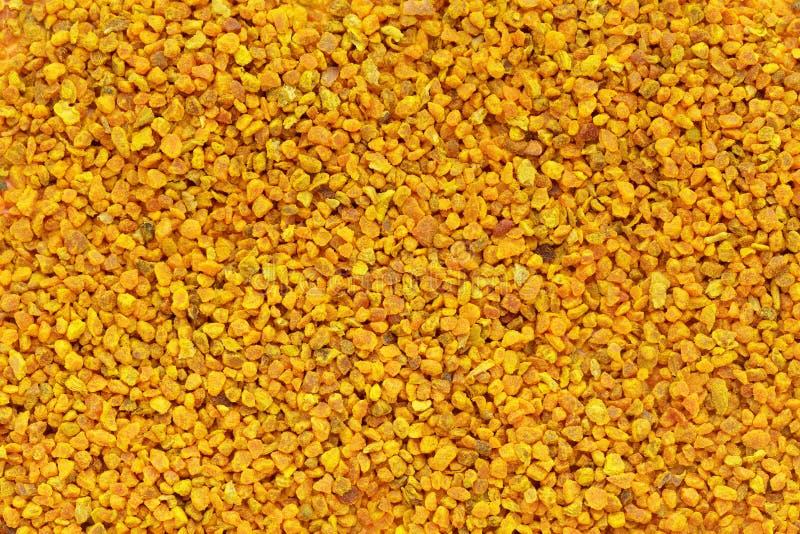 Organic Turmeric or Haldi (Curcuma longa) in tea cut size. stock image