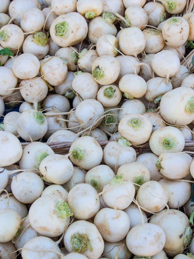 Download Organic turnip stock image. Image of bulb, turnip, brassica - 37961913