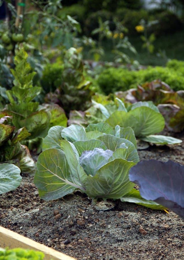 Organic vegetable garden bed