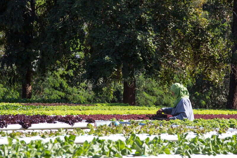 Organic vegetable garden stock image