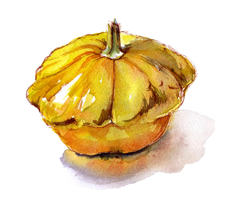 Organic vegetable squash yellow watercolor sketch royalty free illustration
