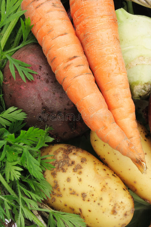 Download Organic vegetables stock image. Image of greenery, color - 10666385