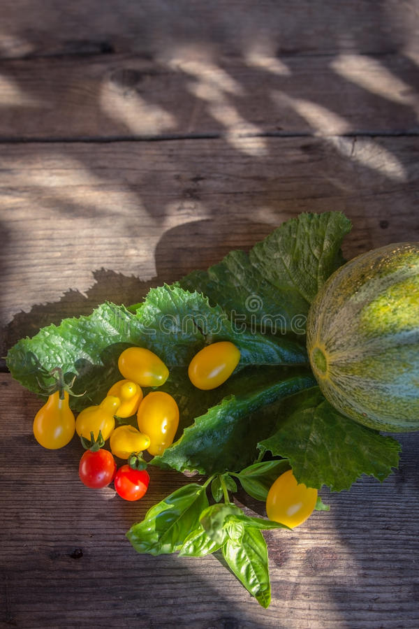 Organic vegetables grown in the eco garden. In summer stock photography