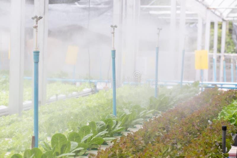 Organic Vegetables in organic  farm. Vegetable farm, Water springier, spray watering to hydroponics organic vegetable farm royalty free stock photo