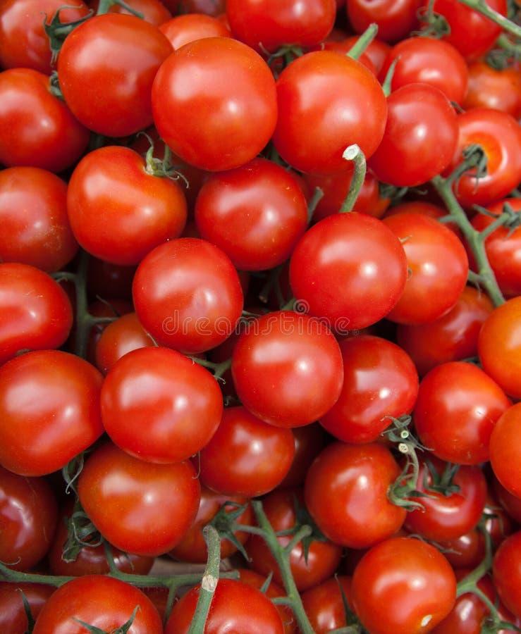 Organic Vine Tomatoes royalty free stock photo