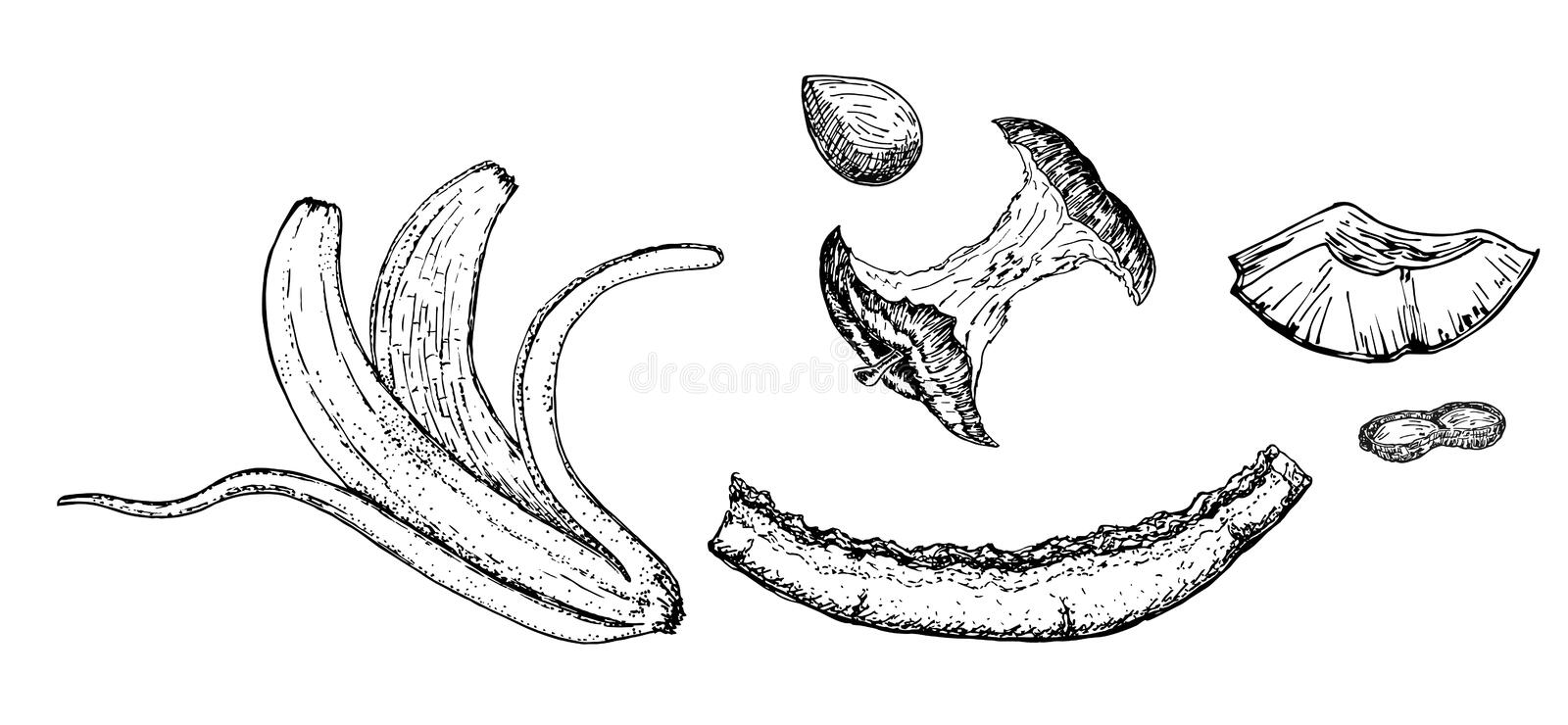 Organic waste, food compost collection isolated on white background. Sketch. Banana and watermelon rind, and apple stump vector illustration royalty free illustration
