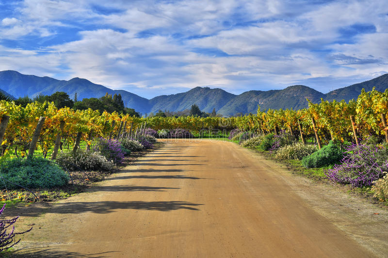 Organic winery. Vineyards - the world's largest organic winery. Located in Chile´s main wine valleys, always producing the highest quality wines with a stock photos