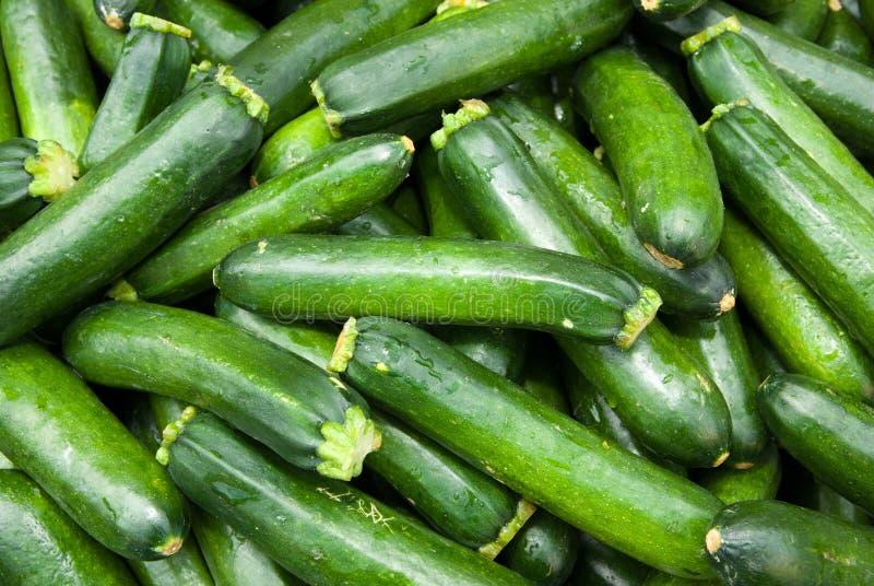 Organic Zucchini Squash royalty free stock image