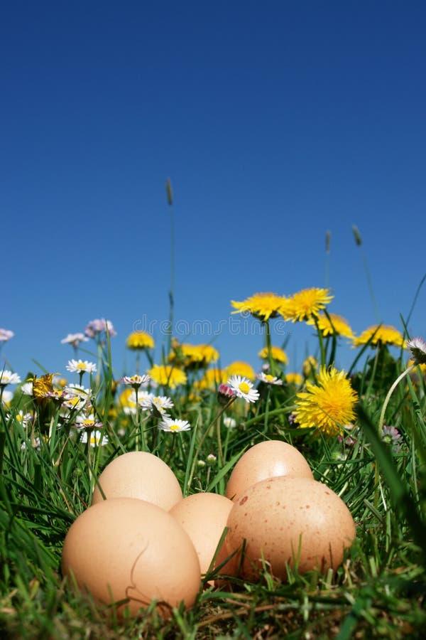 organicznie zdjęcia stock
