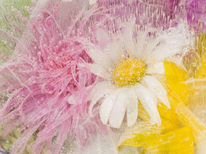 Organicznie abstrakcja z chamomile kwiatami obrazy royalty free