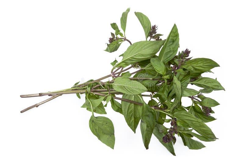 Organicznie Azjatyccy basilów liście na białym tle zdjęcie royalty free