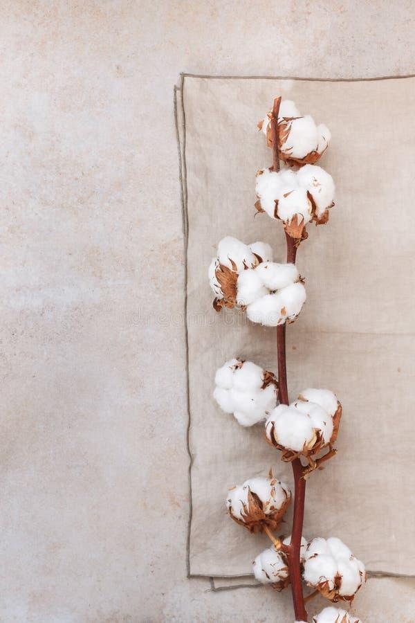 Organicznie Bawełnianej rośliny kwiatu gałąź fotografia stock