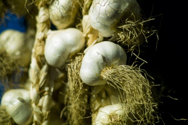 Organicznie czosnek (Alium sativum) obrazy royalty free