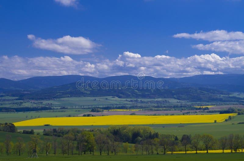 Organicznie dorośnięcie dla zielonej energii - biodiesel produkcja zdjęcie stock