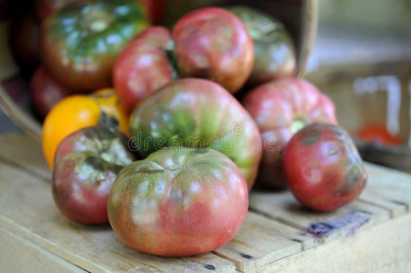 Organicznie heirloom pomidory zdjęcie stock
