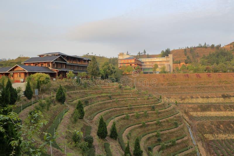 Organicznie herbaciana rezydencja ziemska huaxiangyuan firma obraz stock