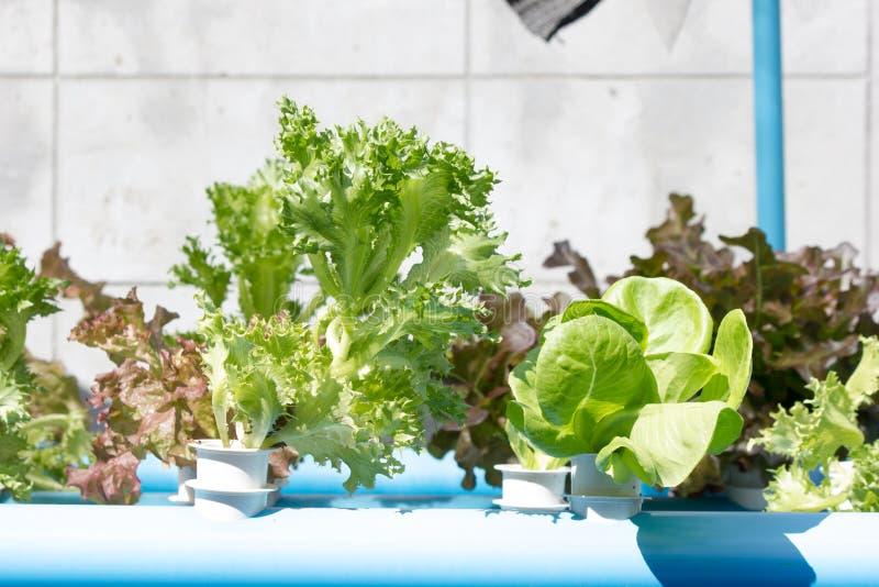 Organicznie hydroponic jarzynowy kultywaci gospodarstwo rolne zdjęcie stock