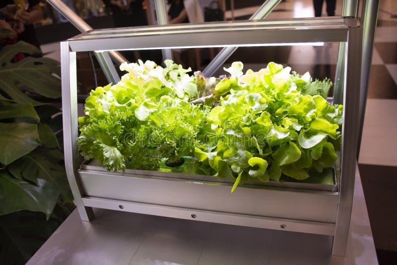 Organicznie hydroponika warzywa i owoc ogródu pudełko salowy dla uprawiać ziemię zdjęcia stock
