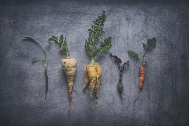 Organicznie Korzeniowi warzywa na Wietrzejącym Scratchy tle obrazy stock