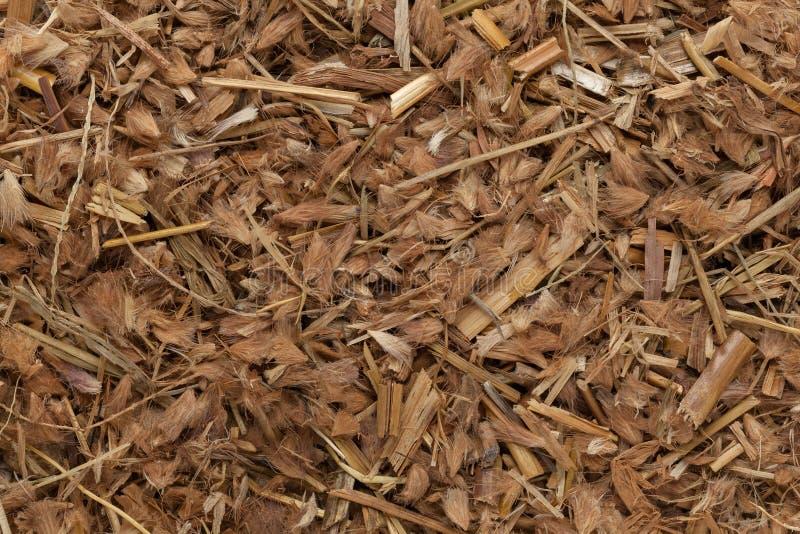 Organicznie Kyasuwa trawa (Pennisetum pedicellatum) zdjęcie royalty free