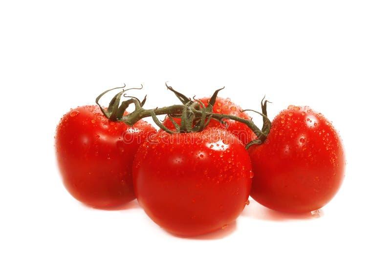 organicznie pomidory zdjęcie stock