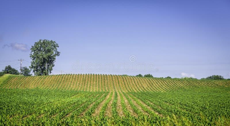 Organicznie rolna ziemia z rzędami fotografia stock