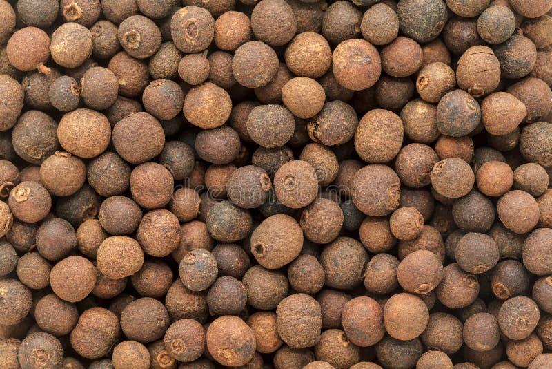 Organicznie suchy Fałszywy Czarny pieprz & x28; Embelia Ribes& x29; fotografia stock