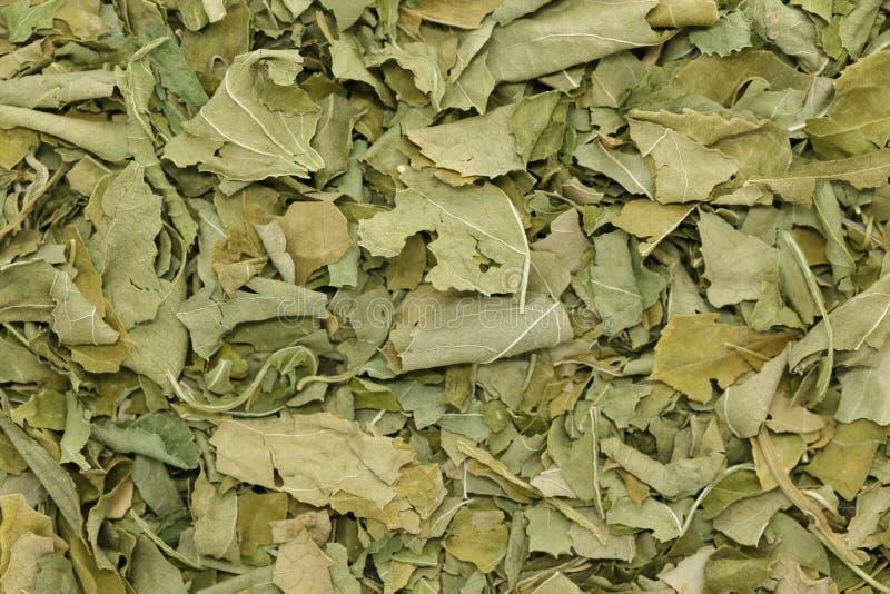 Organicznie susi passionflower liście (Passiflora incarnata) zdjęcie royalty free