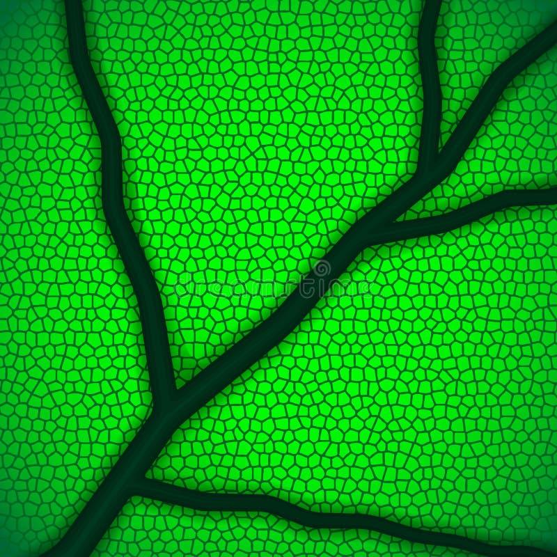 Organicznie tło liść makro- ilustracji