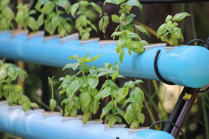 Organicznie vetgetable w błękit drymbie zdjęcia stock