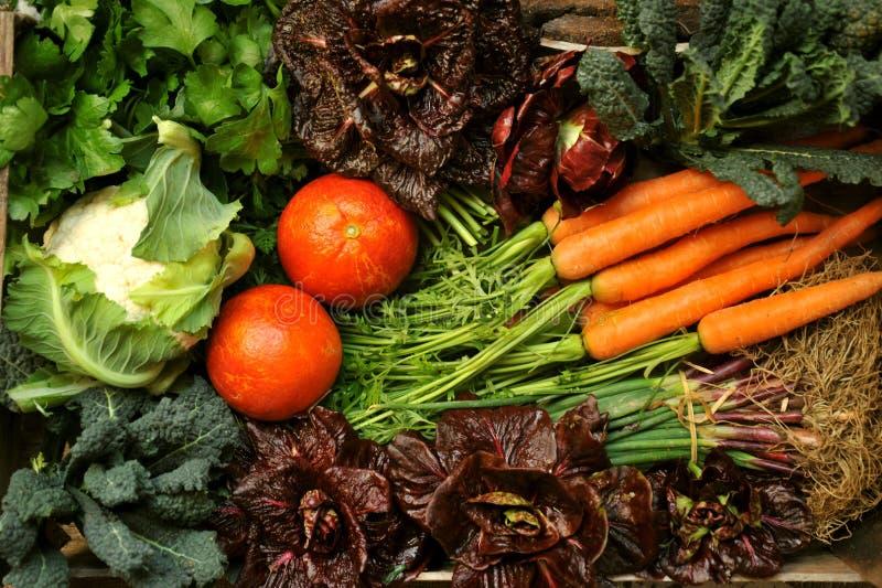 Organicznie warzywa z sałatką, kalafior, marchewki, kale, cebule, pietruszka obraz royalty free